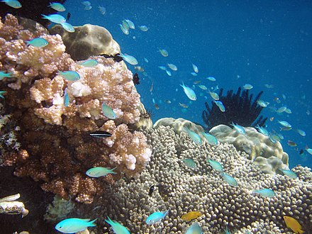 Raja Ampat Islands, West Papua, has the highest recorded level of diversity in marine life according to Conservation International. Raja Ampat 2.jpg