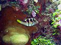 Reef0901 - Flickr - NOAA Photo Library.jpg