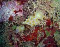 Reef1137 - Flickr - NOAA Photo Library.jpg