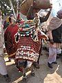 Religious Ox - Gangasagar Fair Transit Camp - Kolkata 2012-01-14 0786.JPG