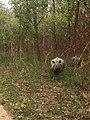 Rhino spotted on Chitwan safari.jpg