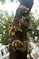 Rio de Janeiro Plants on tree.jpg