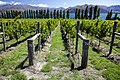 Rippon Vineyard (Best of new zealand 5345124291).jpg