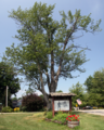 Rockfield, Indiana memorial tree.png