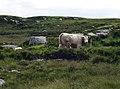 Rocky moorland and bog grazing near Bundovowen - geograph.org.uk - 486756.jpg
