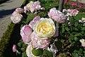 Rose garden @ Parc de Bagatelle @ Paris (27765662024).jpg