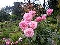 Roses au jardin du thabor a rennes - panoramio (1).jpg