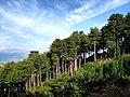 Rospigliani forêt Rospa-Sorba.jpg