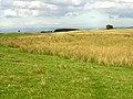 Rough Pasture and Bog - geograph.org.uk - 246092.jpg