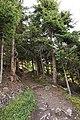 Sölden - trail in forest 2.jpg