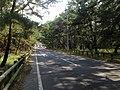 Saga Prefectural Road No.250 and Nijinomatsubara Station in Niji Pine Grove 2.jpg