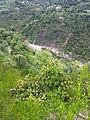 Sairan Goan Naala - panoramio.jpg
