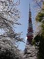 Sakura and Tokyo Tower.jpg
