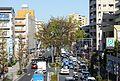 Sakuragawa5keyakitrees.jpg