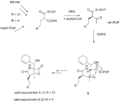 Salinosporamide A Biosynthesis.png