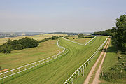 Salisbury Racecourse with the cathedral in the distance.