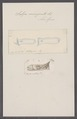 Salpa emarginata - - Print - Iconographia Zoologica - Special Collections University of Amsterdam - UBAINV0274 092 08 0041.tif