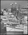 San Pedro, California. Part of the fleet of fishing boats operated by residents of Japanese ancestr . . . - NARA - 536828.tif