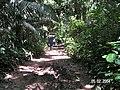 Sandoval , Tambopata - panoramio (31).jpg