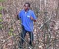 Sansevieria fischeri in its natural habitat (5230575391).jpg