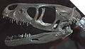 Saurornitholestes langstoni skull.jpg