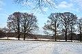 Schaarsbergen Hoge erf in winterscene with 2 solitairs, right oak, left beech - panoramio.jpg