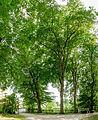Schlosspark Leonhard 2274 Mercator 5.jpg