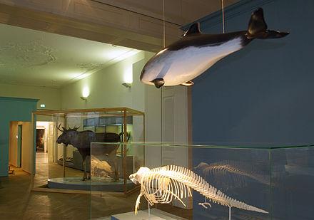 naturwissenschaftliches museum flensburg - wikiwand, Hause ideen