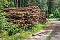 Sciklieva reserve (Belarus, June 2020) 17.jpg