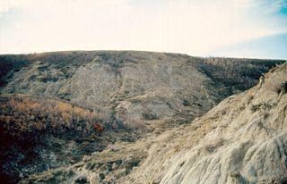 Scollard Formation