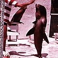 Sea Lion performance during a show at Aquarama (3247324599).jpg