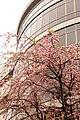 Seikei University (11).jpg