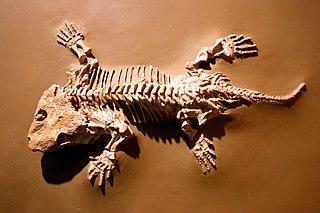<i>Seymouria</i> genus of reptile-like amphibians