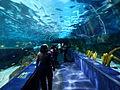 Shark Cave Ripley's Aquarium Myrtle Beach 2.JPG