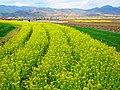Shaxi Village - panoramio (10).jpg