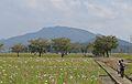 Shiga Mt.Kinugasa 2013-10B.JPG