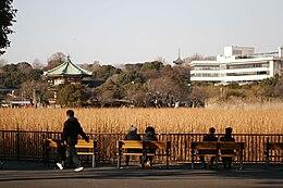 Shinobazu no ike by mrhayata in Ueno Park, Tokyo.jpg