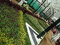 Snap from Lalbagh Flower Show Aug 2013 8357.JPG