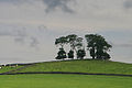 Sparse stand of trees - geograph.org.uk - 1417745.jpg