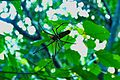 Spider - panoramio (13).jpg