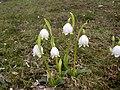 SpringSnowflake.jpg