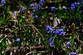 Spring in Lambton Park, Toronto, ON (26397318962).jpg