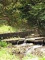 Starr-090617-0973-Mangifera indica-habit and water diversion ditch-Huelo-Maui (24847263742).jpg
