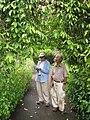 Starr-100803-8431-Strongylodon macrobotrys-habit with Kim and Takeda-Enchanting Floral Gardens of Kula-Maui (25019267336).jpg
