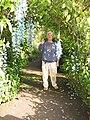 Starr-120301-3218-Strongylodon macrobotrys-flowering habit with Takeda-Enchanting Floral Gardens of Kula-Maui (25110564186).jpg