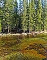 Still Water Runs Deep, Yosemite (18243131684).jpg