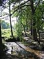 Stream near Holmsley Inclosure, New Forest. - geograph.org.uk - 554655.jpg