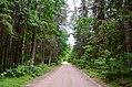 Sudvajų miškas.JPG