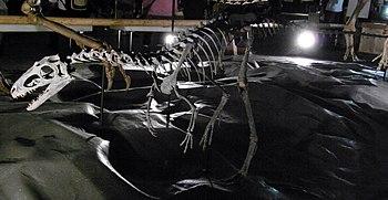 Suskityrannus mount at Dino Kingdom 2012.jpg