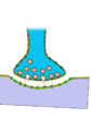 Synapse unlabeled.png